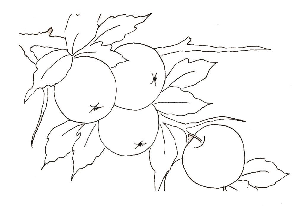 Desenho De Acerola Na Arvore Para Colorir Tudodesenhos
