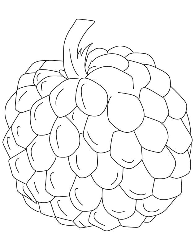Custard Apple Coloring Pages : Apple outline coloring page sketch