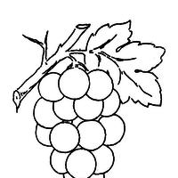 desenho de uvas para crianças para colorir tudodesenhos