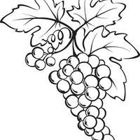 desenhos de uva para colorir tudodesenhos
