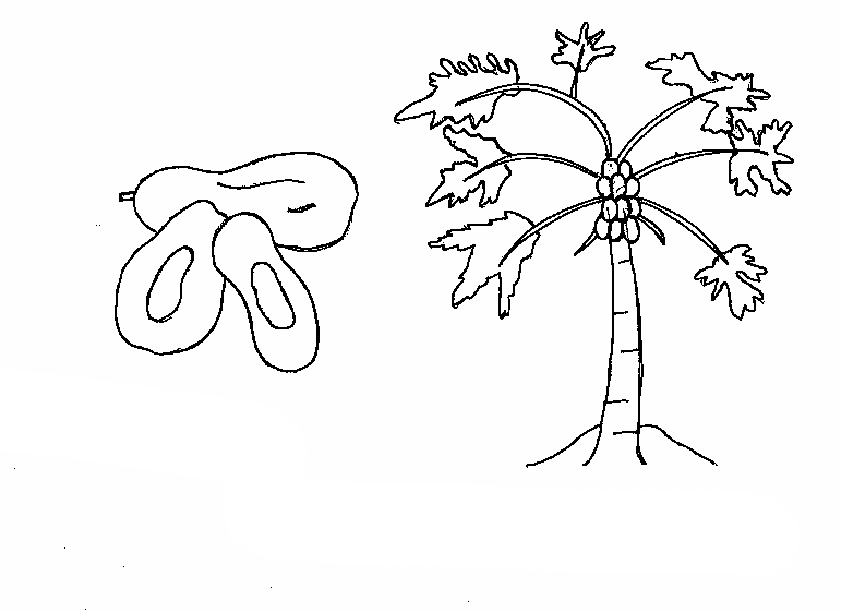 Tree Coloring Pages For Kindergarten