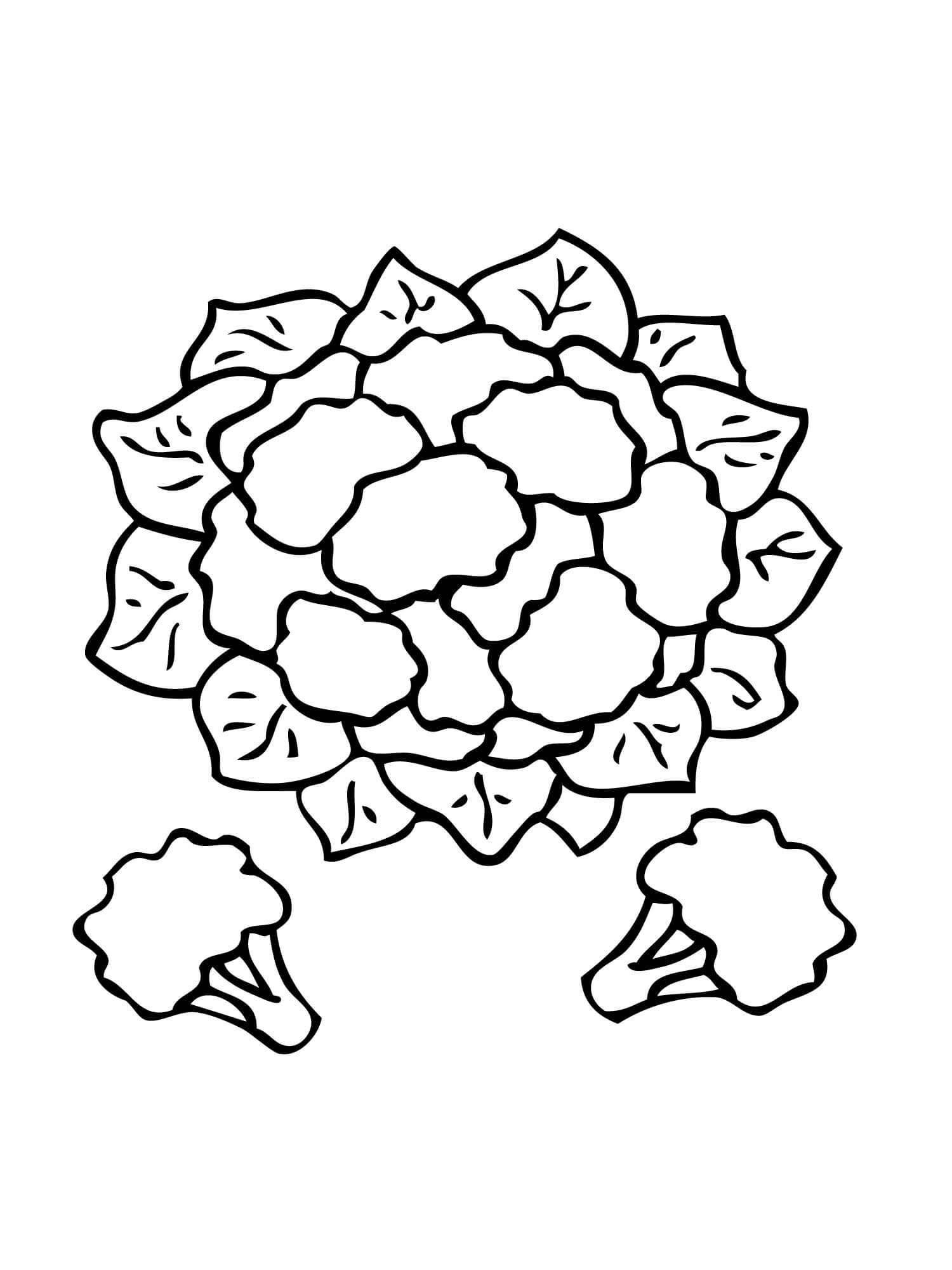 Desenho de Couve-flor para colorir - Tudodesenhos