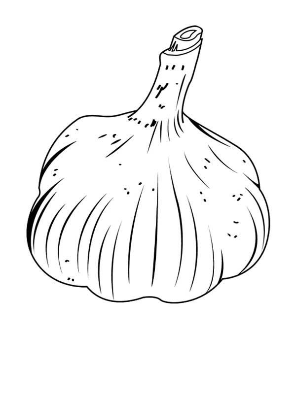Garlic coloring page
