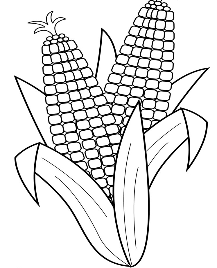 320068 furthermore Eggplant likewise Milho in addition Corn Coloring Page also Serpiente Para Colorear. on corn coloring pages