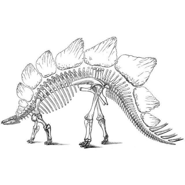 Desenho De Esqueleto De Dinossauro Para Colorir