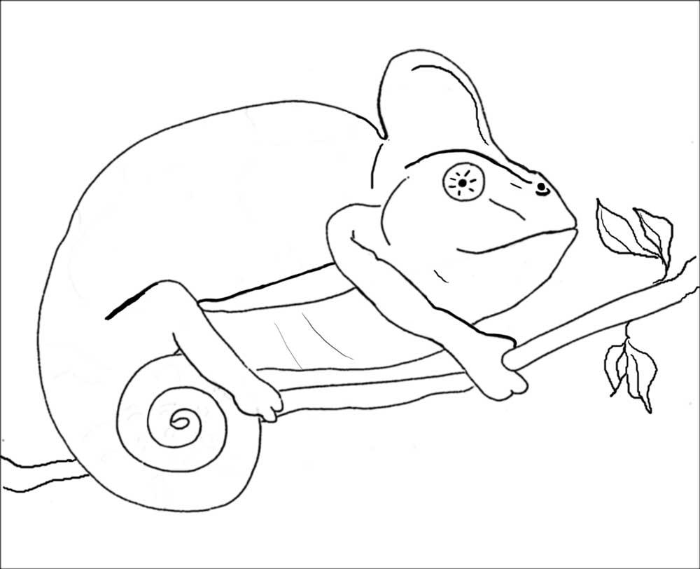 desenho de camaleão caminhando no galho para colorir tudodesenhos