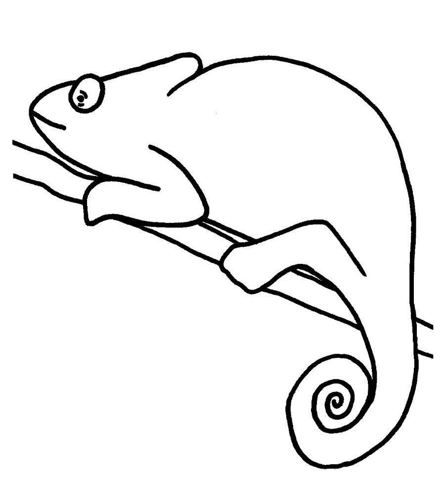 desenho de camaleão no galho para colorir tudodesenhos
