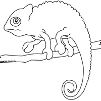 desenho de camaleão filhote para colorir tudodesenhos