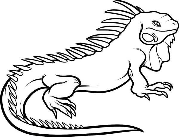 Desenho De Iguana Lagarto Para Colorir Tudodesenhos