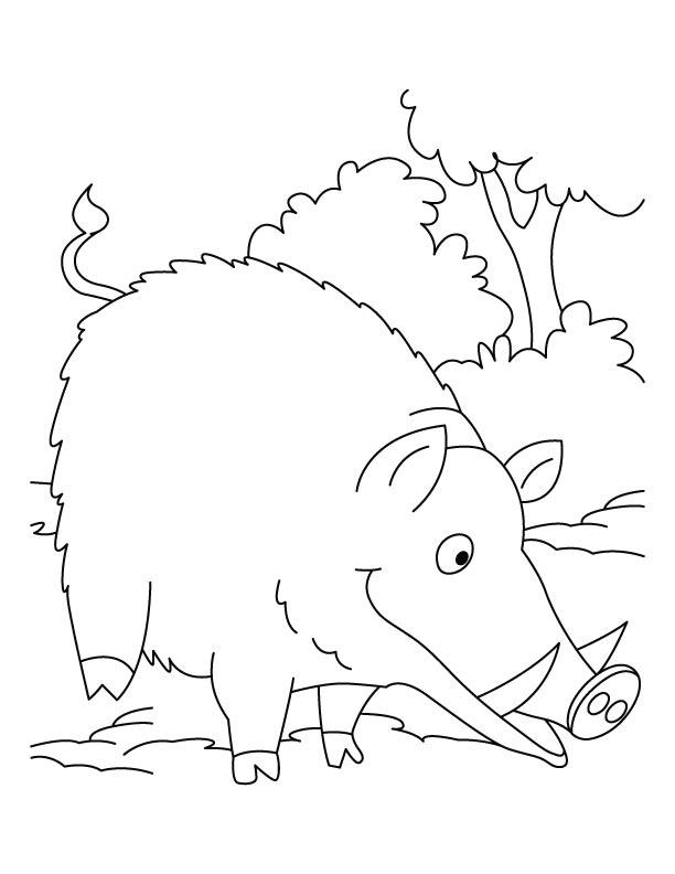 desenho de javali na savana para colorir tudodesenhos