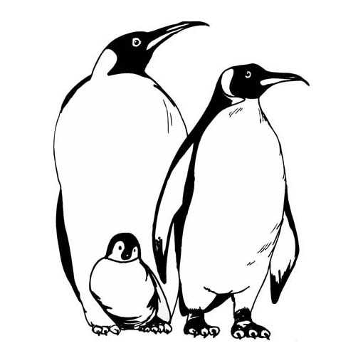 Desenho De Família De Pinguins Para Colorir