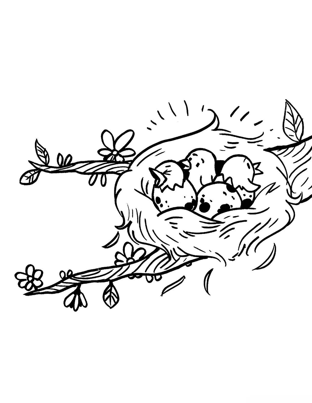 desenho de filhotes de passarinho no ninho para colorir tudodesenhos