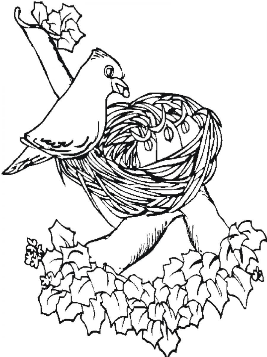 desenho de mam e p ssaro cuidando do ninho para colorir tudodesenhos. Black Bedroom Furniture Sets. Home Design Ideas