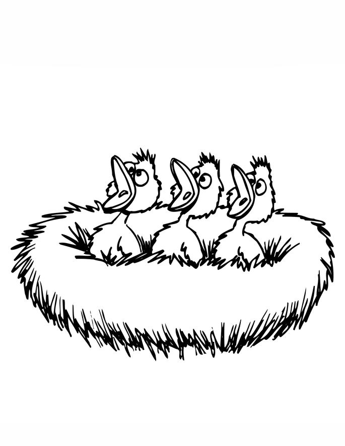 Resultado de imagem para ninho com filhotes em png