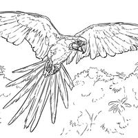 Desenhos De Aves Para Colorir Tudodesenhos