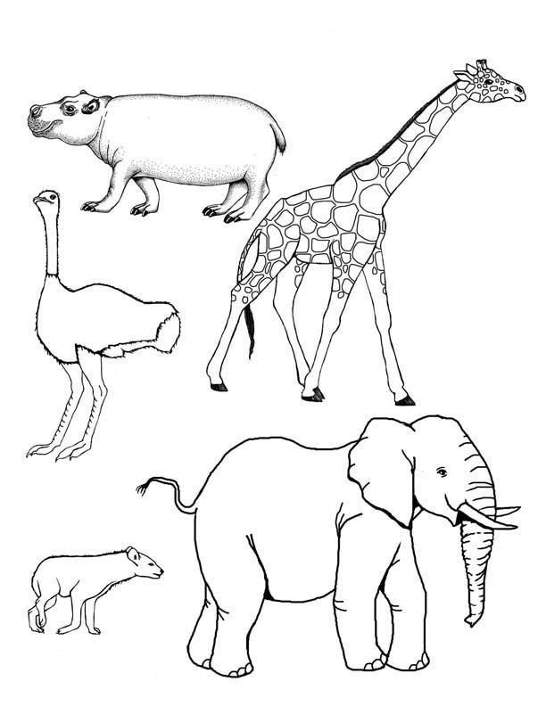 desenho de bichos da savana para colorir tudodesenhos