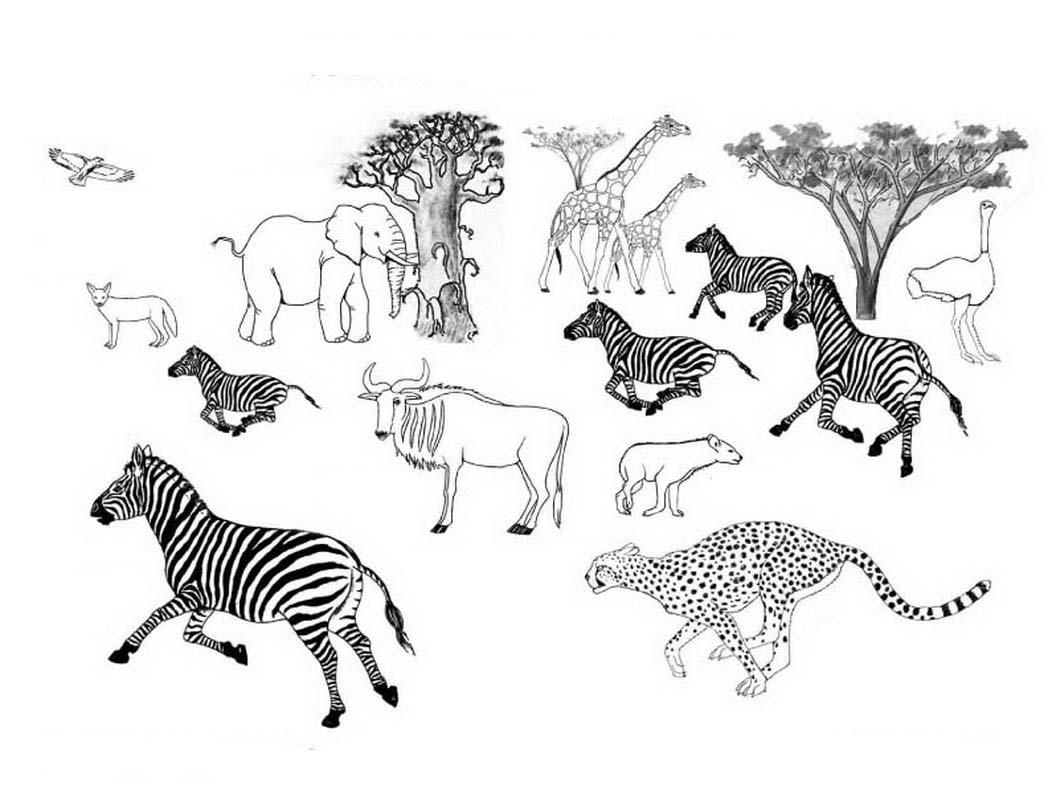 Desenhos De Animais Para Colorir: Desenho De Espécies Animais Da Savana Para Colorir