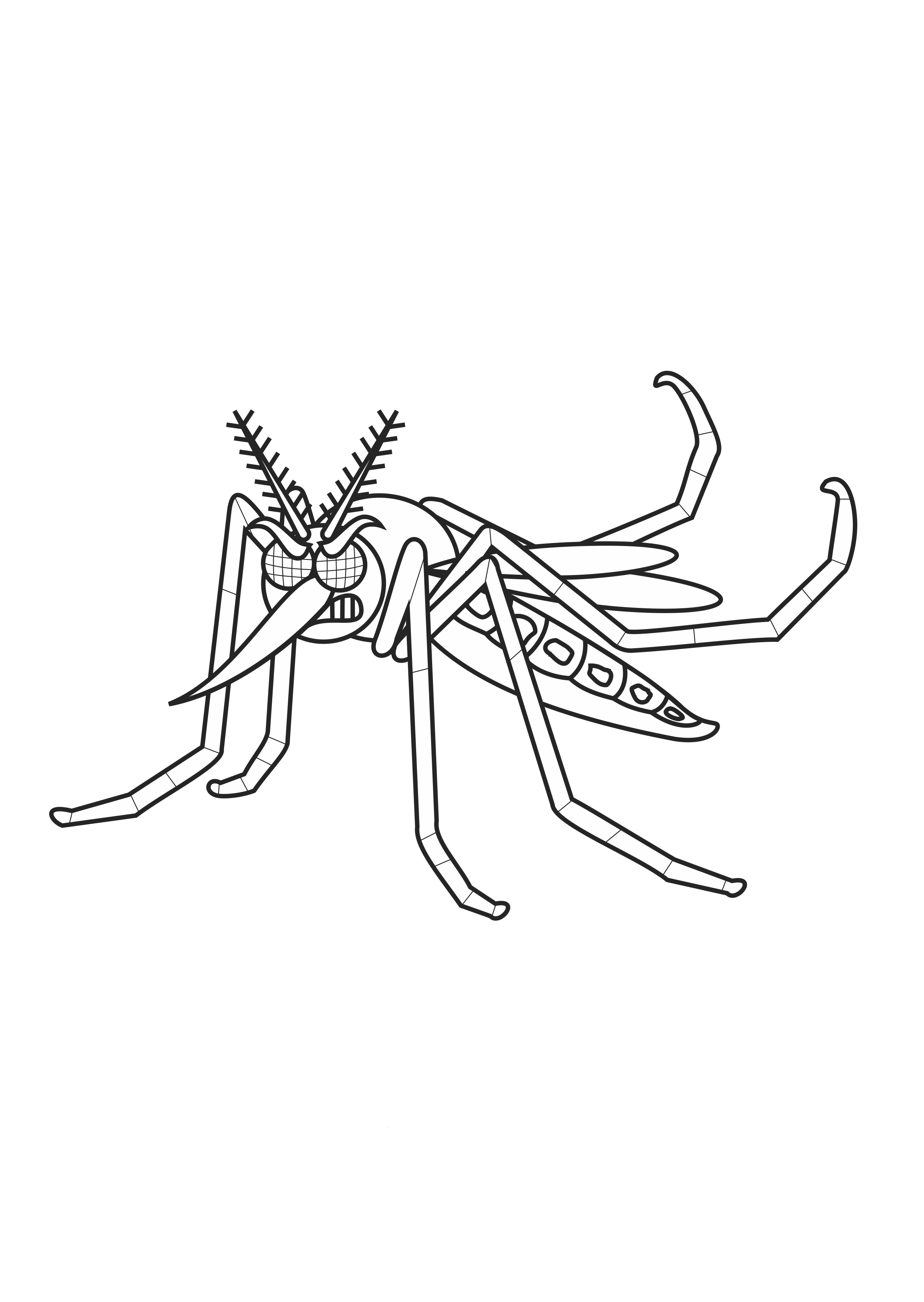 desenho de dengue transmissor de zika virus para colorir tudodesenhos
