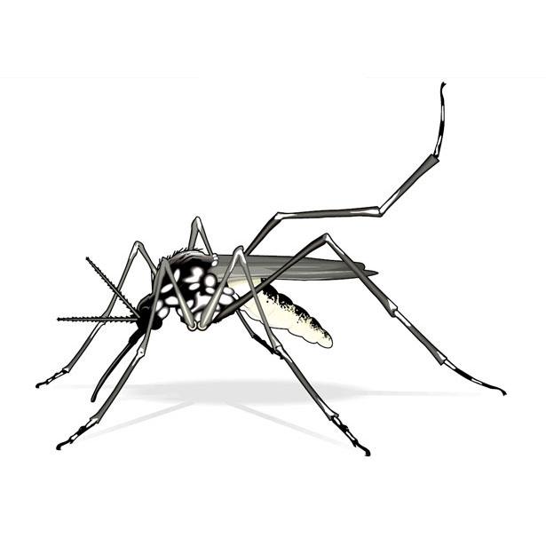 desenho de mosquito da dengue para colorir tudodesenhos