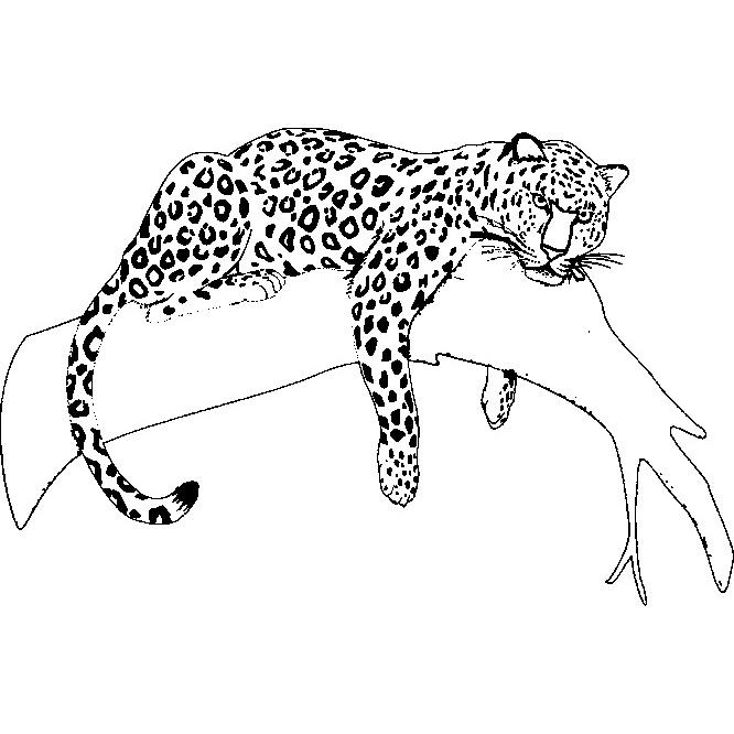 Desenho De Jaguar Descansando No Galho Para Colorir