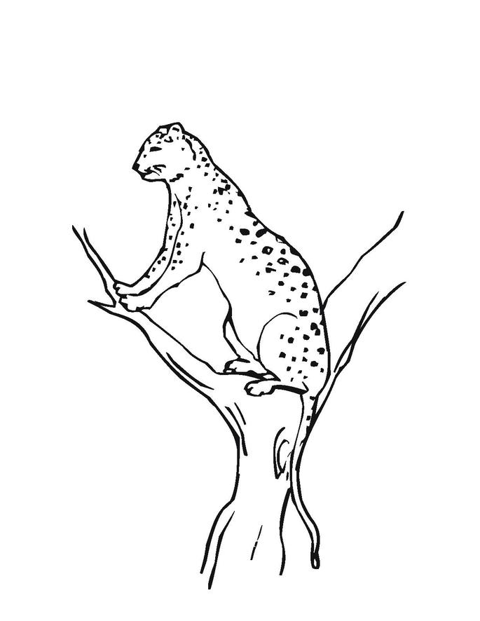 Desenho De Jaguar Sentado Na 225 Rvore Para Colorir