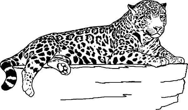 Desenho De Onca Pintada Deitada Para Colorir