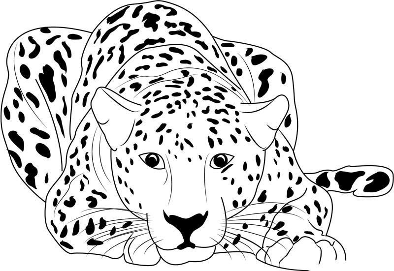 шаблон леопарда картинки