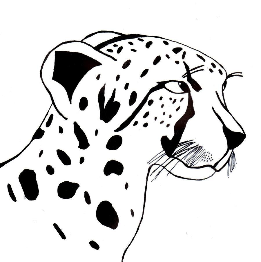 desenho de guepardo felino para colorir tudodesenhos