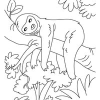 desenhos de mamíferos para colorir tudodesenhos