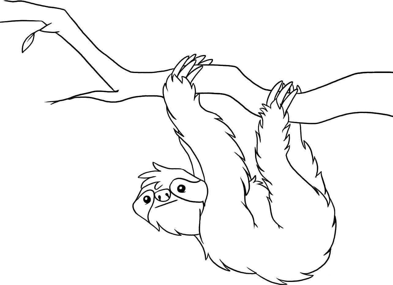 desenho de bicho preguiça segurando galho para colorir tudodesenhos