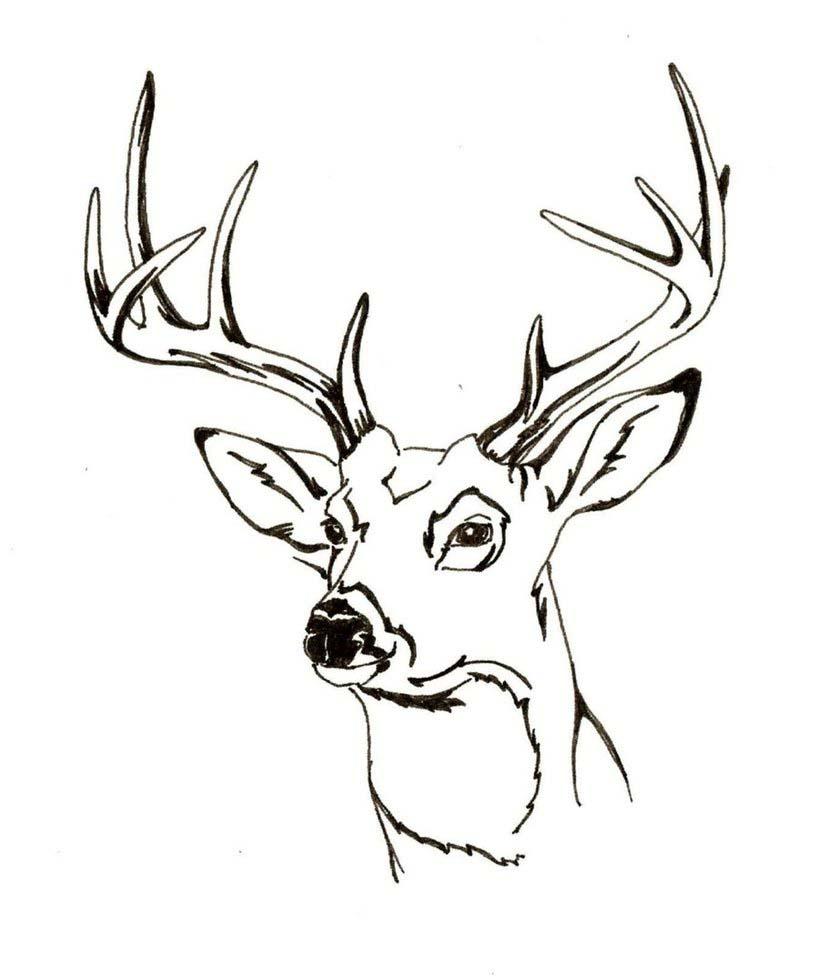 D Line Drawings Logo : Desenho de cabeça veado para colorir tudodesenhos
