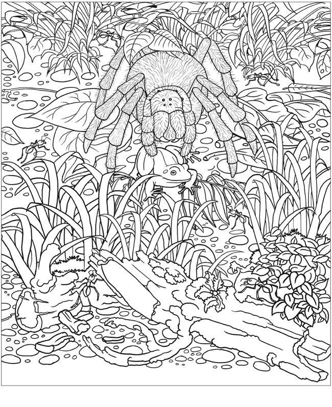 Animal Camouflage Coloring Pictures : Desenho de bichos da amaz?nia para colorir tudodesenhos