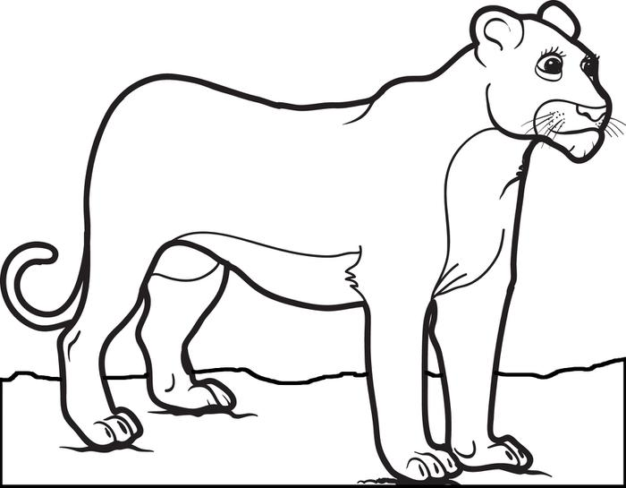 lion growling coloring pages - photo#23