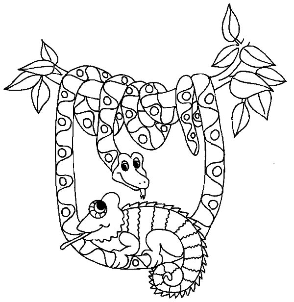 Desenho De Cobra Sucuri Para Colorir