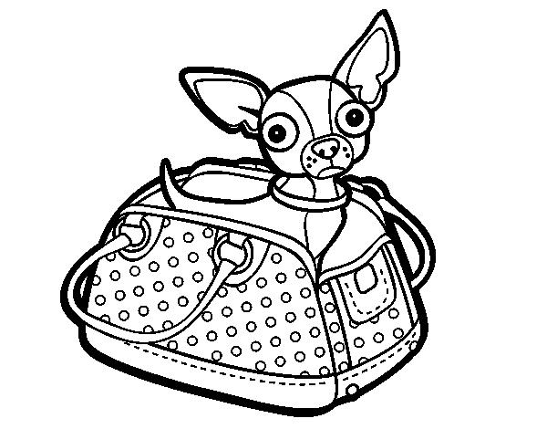 Desenho De Cachorro Chihuahua Na Bolsa Para Colorir Tudodesenhos