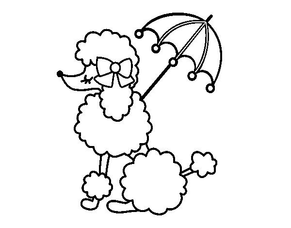 Desenho De Cachorro De Madame Para Colorir Tudodesenhos