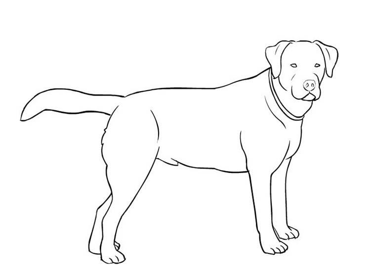 desenho de cachorro labrador para colorir  tudodesenhos