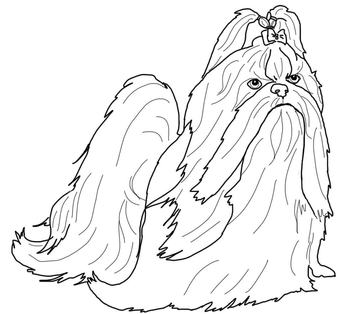 Adult Coloring Page Shih Tzu