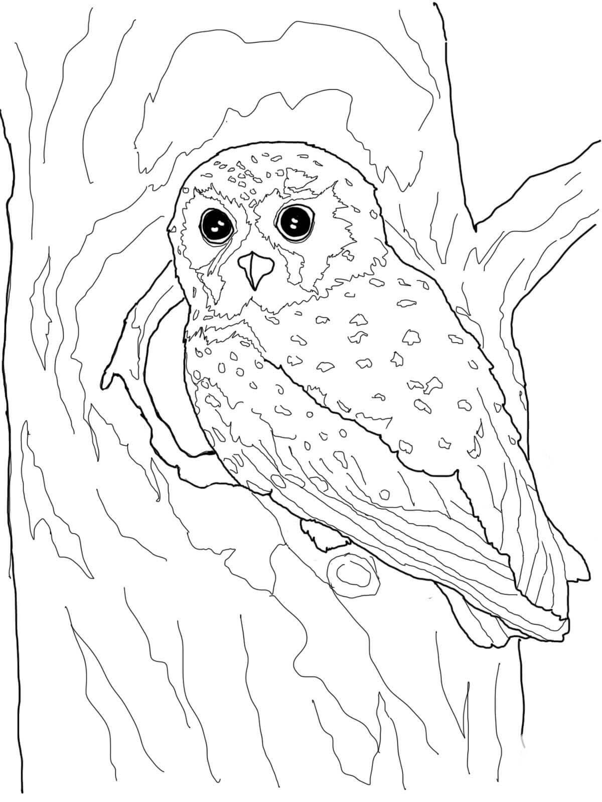 desenho de coruja na casa da árvore para colorir tudodesenhos