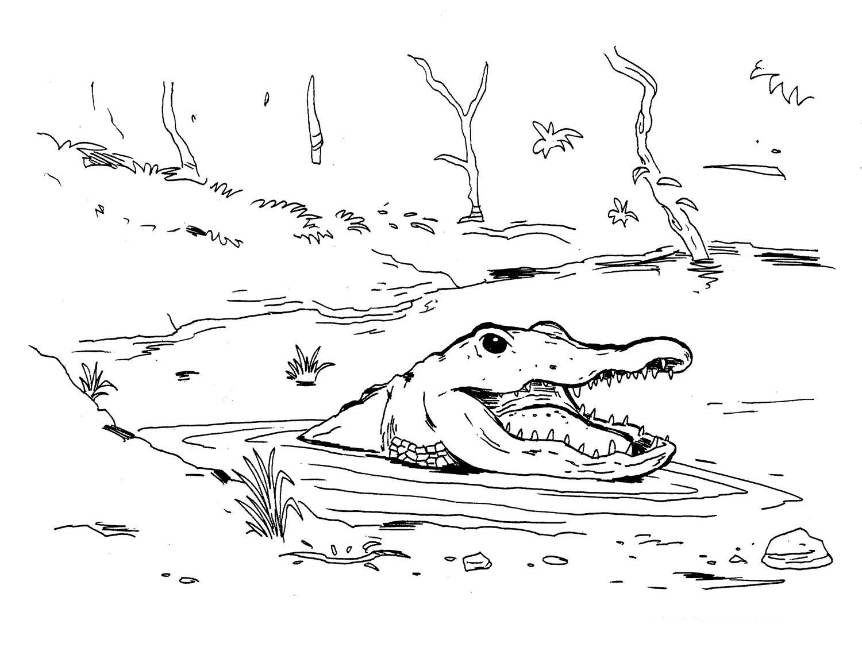 Coloring Pages Of Wetland Animals : Desenho de jacaré atacando para colorir tudodesenhos