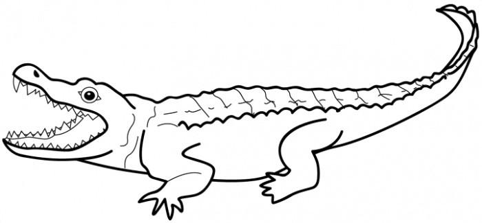 desenho de jacaré feio para colorir tudodesenhos