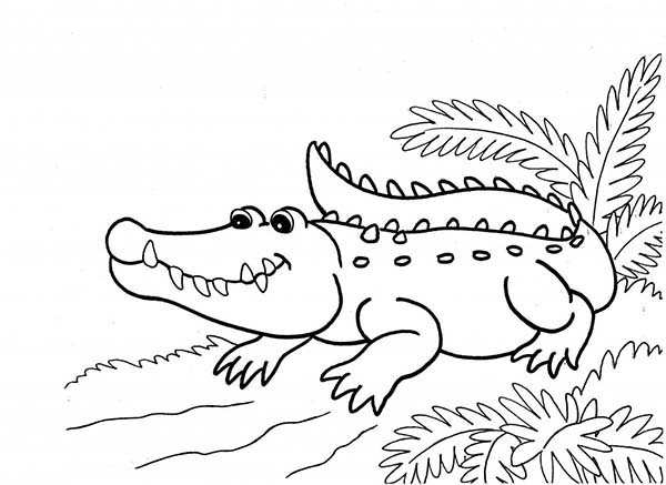 desenho de jacaré passeando para colorir tudodesenhos