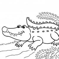 Desenho de Jacaré feliz para colorir - Tudodesenhos