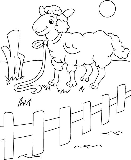 Desenho De Ovelha Com Coleira Para Colorir