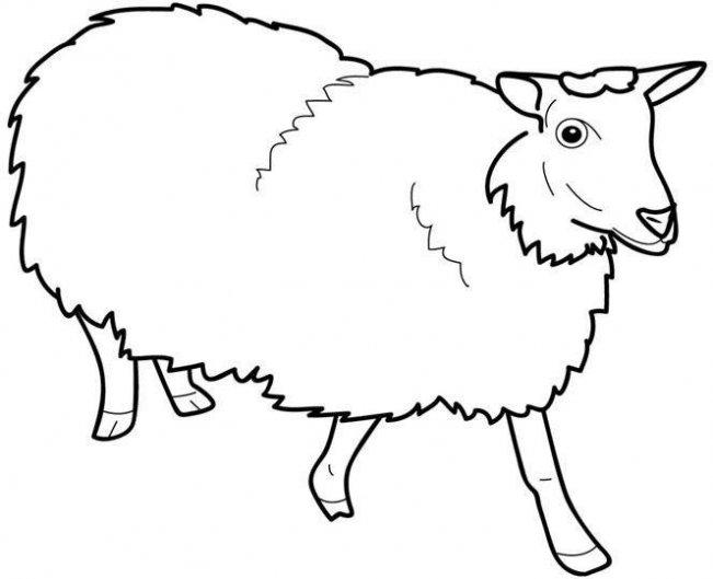 desenho de ovelha para colorir tudodesenhos