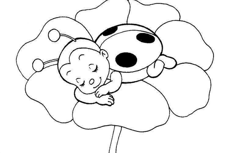 desenho de joaninha cheirando a flor para colorir tudodesenhos