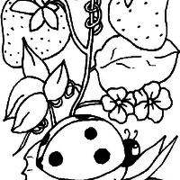 Desenho De Coelho E Morango Para Colorir Tudodesenhos