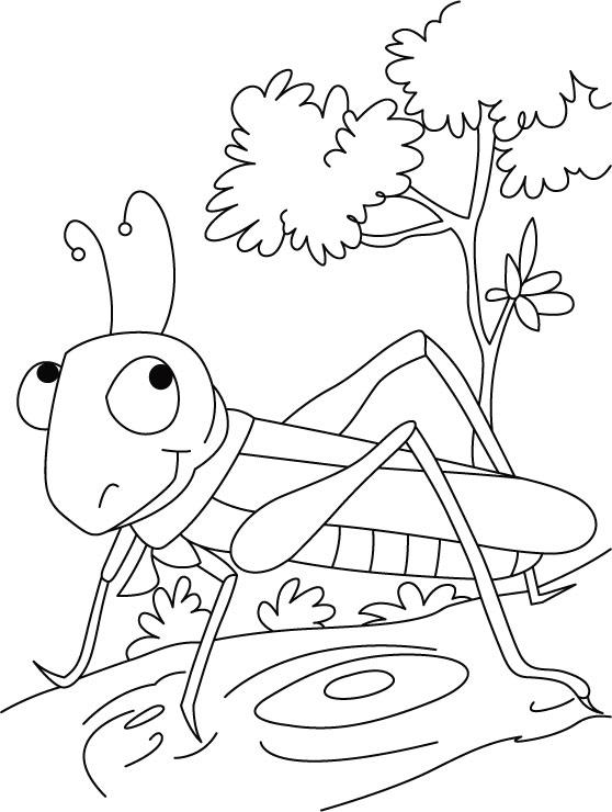 desenho de gafanhoto no bosque para colorir tudodesenhos