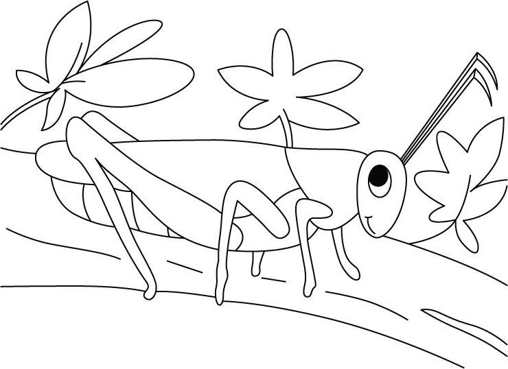 desenho de gafanhoto passeando para colorir tudodesenhos