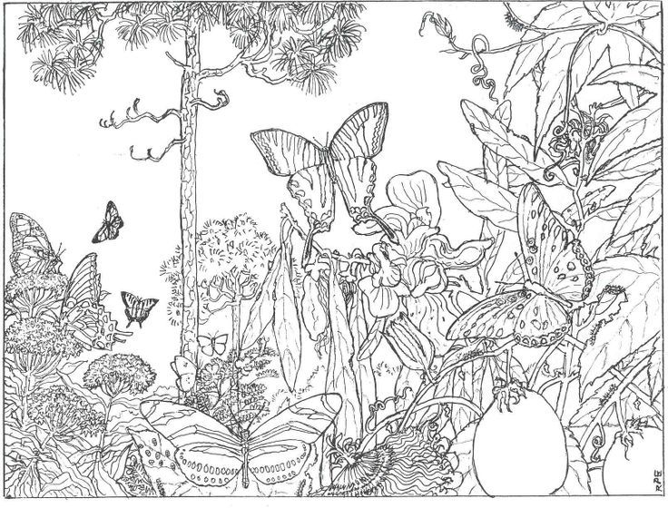 Desenho de Borboletas na floresta para colorir Tudodesenhos